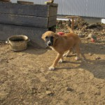 Store hunde bevogter rumcenter