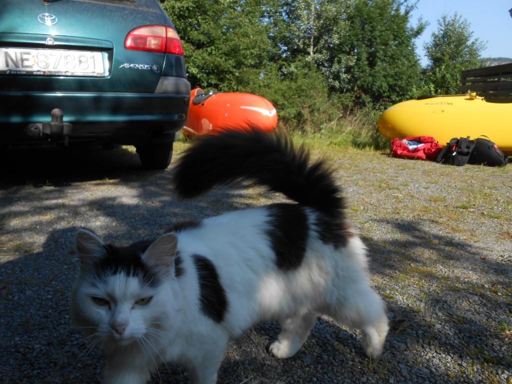 Naboens Kat var lidt Misfornøjet