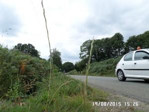 PBP 2015 Randonneurs on the road